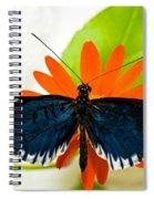 Cythera Butterfly Spiral Notebook