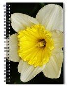 Daffodil 2014 Spiral Notebook