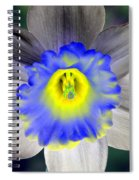 Daffodil Dreams - Photopower 1919 Spiral Notebook