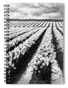 Daffodil Fields II Spiral Notebook