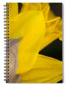 Daffodil Flower Spiral Notebook
