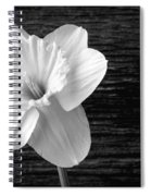 Daffodil Narcissus Flower Black And White Spiral Notebook