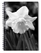 Daffodil Flower Black And White Spiral Notebook