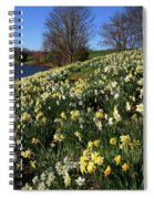 Daffodil Hill Spiral Notebook