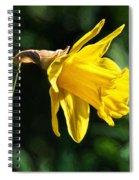 Daffodil - Impressions Spiral Notebook