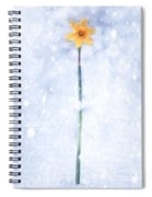 Daffodil In Snow Spiral Notebook
