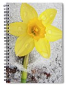 Daffodil In Spring Snow Spiral Notebook