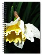 Daffodil In The Rain 2 Spiral Notebook