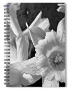 Daffodil Monochrome Study Spiral Notebook