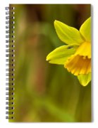Daffodil - No. 1 Spiral Notebook
