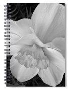 Daffodil Study Spiral Notebook