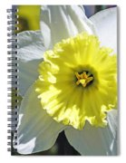 Daffodil Sunshine Spiral Notebook