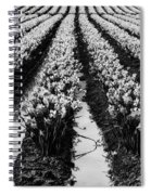 Daffodils Forever Spiral Notebook