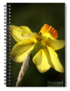 Daffodils Grace Spiral Notebook