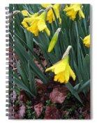 Daffodils In The Rain  Spiral Notebook