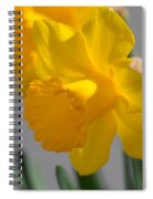 Daffodils In The Setting Sun Spiral Notebook