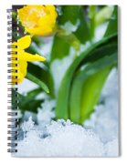 Daffodils In The Snow  Spiral Notebook