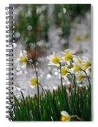 Daffodils On The Shore Spiral Notebook