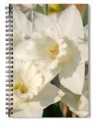 Dafodils162 Spiral Notebook