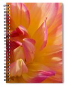 Dahlia 7 Spiral Notebook