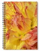 Dahlia - 812 Spiral Notebook