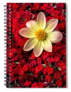 Dahlia And Kalanchoe Spiral Notebook