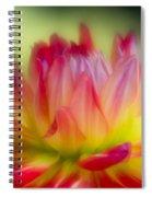 Dahlia Color Explosion Spiral Notebook