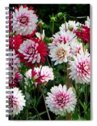 Dahlia Love Spiral Notebook