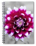 Dahlia Flower 2 Spiral Notebook