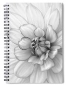 Dahlia Flower Black And White Spiral Notebook