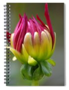 Dahlia Flower Bud Spiral Notebook