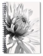 Dahlia Flower In Monochrome Spiral Notebook
