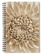 Dahlia Flower Star Burst Sepia Spiral Notebook