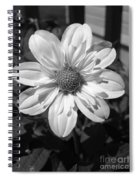 Dahlia Named Alpen Cherub Spiral Notebook