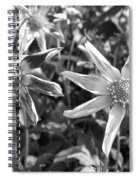 Dahlia Named Amy's Star Spiral Notebook