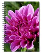 Dahlia Named Blue Bell Spiral Notebook