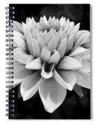 Dahlia Named Brian Ray Spiral Notebook