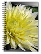 Dahlia Named Canary Fubuki Spiral Notebook