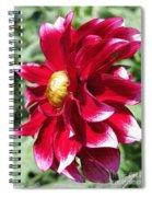 Dahlia Named Darkarin Spiral Notebook