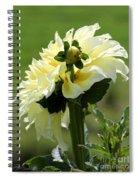 Dahlia Named Kelvin Floodlight Spiral Notebook