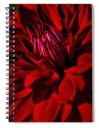 Dahlia Red Spiral Notebook