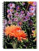 Dahlias And Asters Spiral Notebook