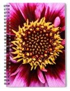 Dahlia's Golden Crown Spiral Notebook