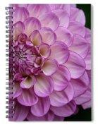 Dahlia's Outta Da Blu Spiral Notebook