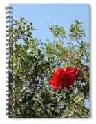 Daily Cycle - Triptych Spiral Notebook