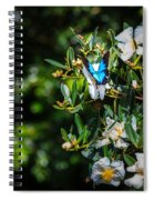 Daintree Monarch Butterfly Spiral Notebook