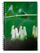 Dainty White Flowers Central Park Spiral Notebook