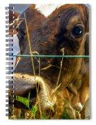 Dairy Cow Spiral Notebook