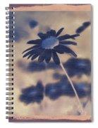 Daisies ... Again - 150ab Spiral Notebook