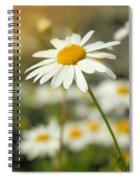 Daisies ... Again - Original Spiral Notebook